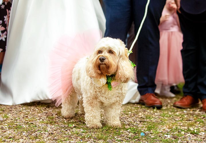 Dog dressed up for a wedding